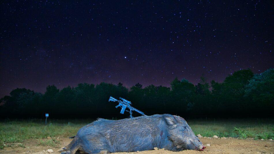 Hog Hunting 101: Keys to a Successful Hunt