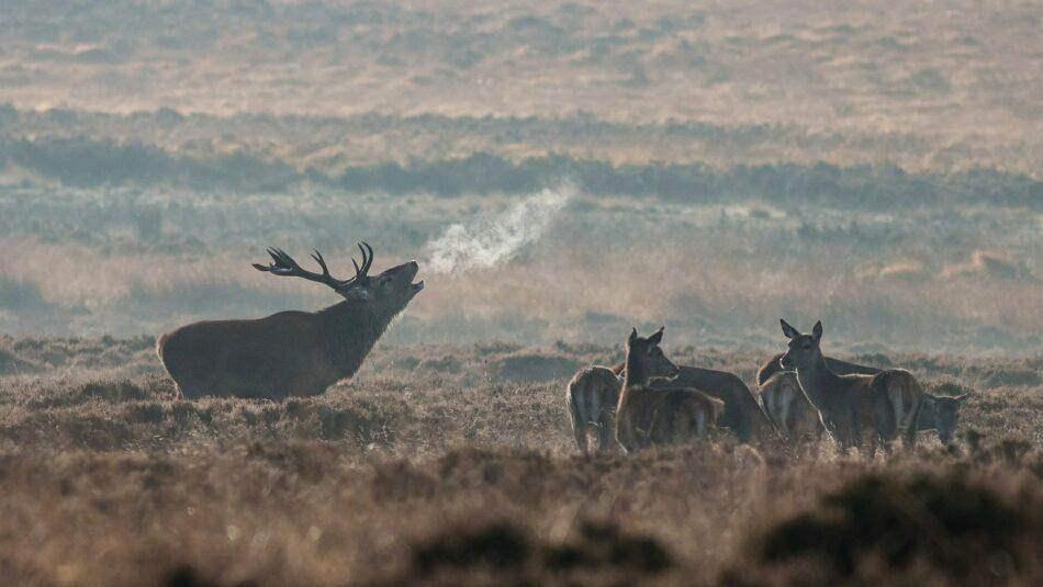 10 of The Best Cartridges for Bringing Down Elk