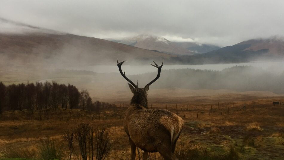 How to Scout for Deer: 10 Time-Tested Tactics