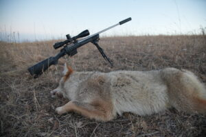 Coyote and Rifle