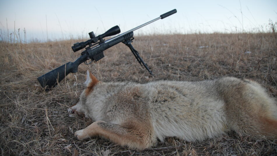 What's the Best Varmint Caliber? Here are the Top 5 Options
